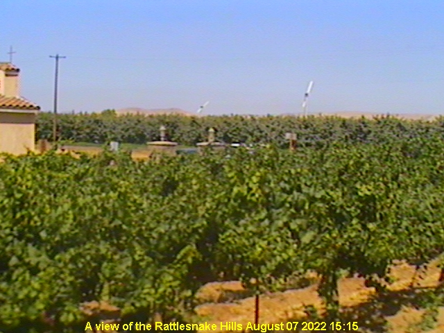 vineyard webcam